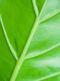 绿色叶子纹理 免版税库存图片
