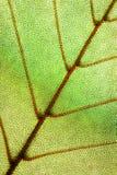 绿色叶子纹理 库存照片