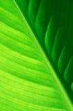 绿色叶子纹理 库存图片