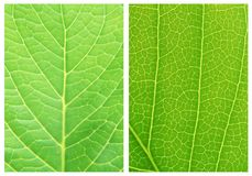 绿色叶子背景样式 库存照片