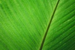 绿色叶子背景绿色叶子背景 免版税库存照片