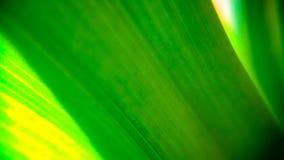 绿色叶子背景设计 免版税库存照片