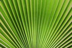 绿色叶子背景 免版税库存图片