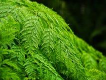 绿色叶子自然背景有blured和bokeh背景 免版税图库摄影