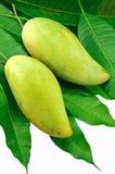 绿色叶子芒果 库存图片