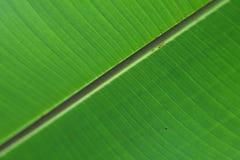 绿色叶子表面 库存图片