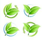 绿色叶子设置了 免版税库存图片