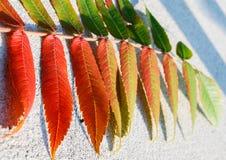 绿色叶子转动的红色 免版税库存照片