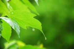绿色叶子雨 库存照片