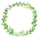 绿色叶子,抽象框架 免版税库存图片