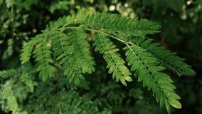 绿色叶子,本质背景 免版税库存图片