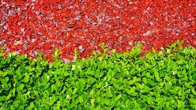 绿色叶子-红色石头 免版税库存照片