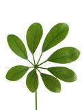 绿色叶子 库存照片