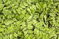 绿色叶茂盛工厂 免版税库存照片
