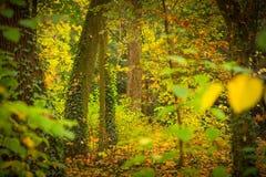 绿色叶茂盛树森林的深度 库存图片