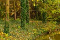 绿色叶茂盛树森林的深度 库存照片