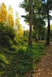 绿色叶茂盛森林和阳光早晨 库存照片