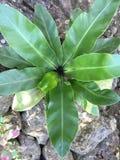 绿色叶茂盛植物 免版税库存照片