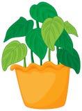 绿色叶茂盛 免版税图库摄影