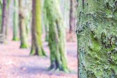 绿色咆哮的树que 免版税图库摄影