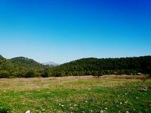 绿色和山 库存照片