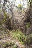 绿色和干草丛 库存图片