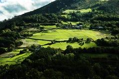 绿色和晴朗的山坡 免版税图库摄影