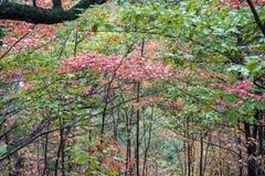 绿色和桔子在秋天森林离开与黑暗的树干 免版税库存图片
