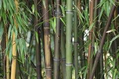 绿色和棕色竹词根特写镜头在冬天 图库摄影