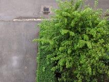 绿色和混凝土 库存图片
