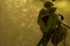 绿色和紫罗兰离开与冷淡的发光的窗口在背景 库存照片