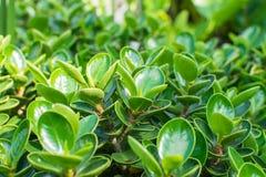 绿色和装饰树桩在庭院里 免版税库存照片