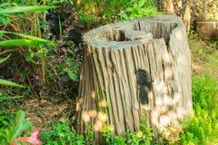 绿色和装饰树桩在庭院里 库存照片