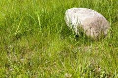 绿色和鹅卵石 免版税库存照片