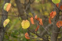 绿色和黄色叶子,特写镜头 免版税库存图片