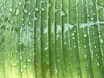 绿色和黄色香蕉叶子充分的框架有许多雨下落的 免版税库存照片