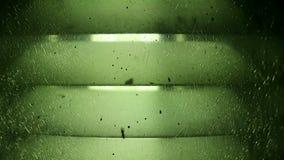 绿色哔拍了作响玻璃灯光和飞行蚂蚁 影视素材
