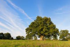 绿色唯一结构树 库存图片
