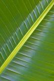 绿色图象叶子本质掌上型计算机 库存图片