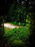 绿色土地森林在密林 免版税库存照片