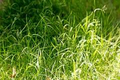 绿色在优质印刷品产品的自然宏观背景美术五十megapixels 免版税库存图片