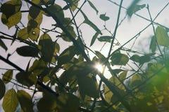 绿色在树,晴朗的天气,秋天离开 免版税库存图片