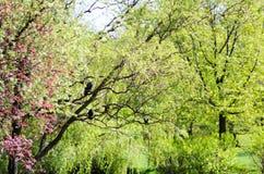 绿色在森林把垂悬从树留在,大迷离背景 黑色鸟 照片可以使用作为背景 库存照片