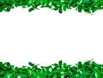 绿色在白色背景离开与文本的拷贝空间 免版税图库摄影