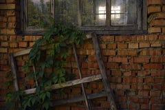 绿色在老墙壁的红砖离开 免版税库存图片