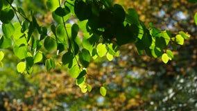 绿色在被弄脏的背景的树枝离开 股票视频