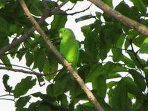 """绿色在TRÃ""""皮库岛的森林里 免版税图库摄影"""
