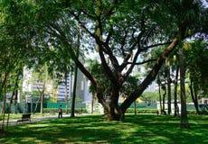 绿色地带公园在马尼拉,菲律宾 库存照片