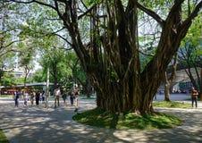 绿色地带公园在马尼拉,菲律宾 库存图片