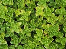 绿色地毯由自然和植物做成 免版税库存图片